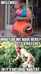 Too funny: Giggle, Funny Stuff, Funnies, Humor, Hilarious, Ratchet