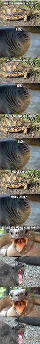 I can't stop laughing...: Knock Knock Joke, Giggle, Cant, Funny Stuff, Funny Animal, So Funny, Turtle