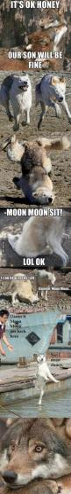 Dammit Moon Moon! CANNOT STOP LAUGHING: Animals, Moonmoon, Gammit Moon, Humor, Dammit Moon, Moon Moon