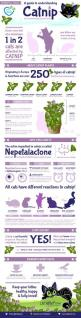 Info-graphic on catnip.