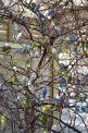 Budgies: Birds Butterflies, Trees, Budgies Parakeet, Nature Littlebirds Roses, Budgie Tree Incredible, Photo, Budgies Birds