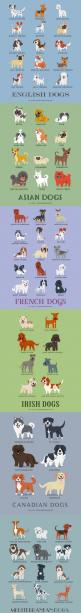 Dogs Of The World. Didn't realize how many dogs there were...wow!: Chspets Adoptchs, Puppies Dogs, Dogs And Puppies, Ohlandtvet Chspets, Pet Illustration, Puppy