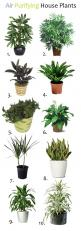 10 Air Purifying House Plants As a side note, one of the plants NASA studied is an excellent humidifier. One six foot Areca Palm will put a quart of water into the air in a day.: House Plants, Houseplant, Purifying House