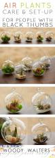 Air Plants:  Set Up and Care for People who Kill Plants.  They are REALLY REALLY EASY!  And really really pretty.  The perfect thoughtful gift for a gardener.: Diy Air Plant, Air Plants, Thoughtful Gifts, Kill Plants, Air Plant Terrarium, Perfect Thoughtf