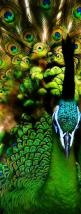 Ohhhh WOW! Pattern at its finest in nature, green with exuberant frivolous delight ||| gorgeous green peacock #pattern #design: Peacocks, Color, Green, Pretty Peacock, Birds, Beautiful Peacock, Animal