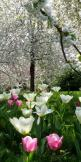 Getting in the spring time mood!: Spring Time, Nature, Tulip, Beautiful, Gardens, Beauty, Flowers, Springtime