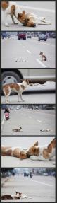 Breaks my heart.........Sometimes animals show more compassion humanity than most people. ❤️: I M Crying, Animal Cruelty, Cried Dogs, Animal Abuse, My Heart, Animal Stories, So Sad, Friend