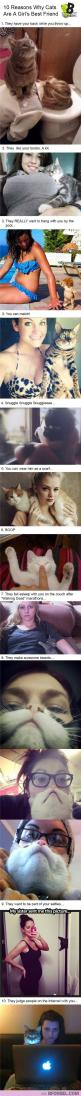 Haha! This cracks me up. 10 Reasons Why Cats Are A Girls Best Friend: Cats, Girls, Kitty Cat, Best Friends, 10 Reasons, Funny Cat, Crazy Cat, Cat Lady