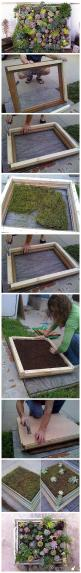 Succulent frame... been trying to figure out something cool to hang on the fence. These could be fun :)