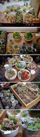 this is the dream. Succulents EVERYWHERE