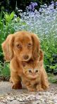 favourite babies: Matching Color, Best Friends, Dog Cat, Puppys And Kittens, Puppy And Kitten, Cats Dogs, Baby Animals, Cute Cats And Kittens, Cute Kittens And Puppies Baby