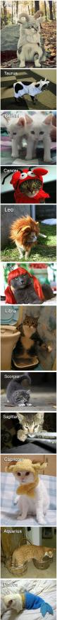 The 12 Cats Of The Zodiac -too funny!: Halloween Costume, Zodiac Signs, Cats Cats, Cat Zodiac, 12 Cats, Zodiac I M, Zodiac Cats, Zodiac Kitties, Cat Lady