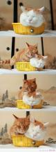 This is sooo my orange cat, except he's be doing this to my black cat, not a white cat with an orange head.: I Love Cats, Fit, Kitty Cats, So Cute, Kitty Kitty, Crazy Cat, Cat Lady, White Cat