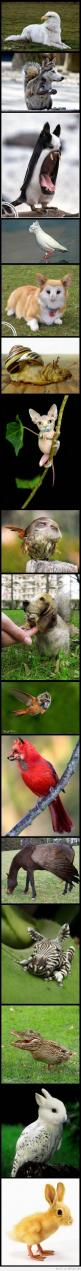 this is hilarious!!!: Face Swap, Animals, Stuff, Awesome, Funny, Photoshop, Funnie