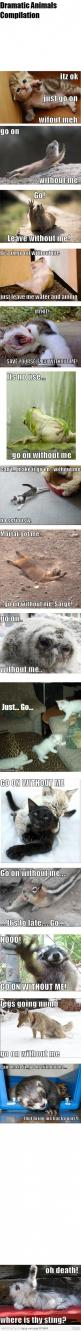 Go on without me..... save yourself!: Animal Funnies, Dramatic Animals, Dramas, Animals Funny Humor, Cute Funny Animals, Beautiful Animals Funny, So Funny, Animal Funny