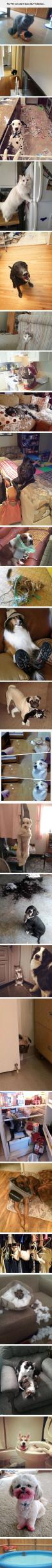 The It's Not What It Looks Like Collection cute animals dogs cat cats adorable dog puppy animal pets funny pictures funny animals funny pets funny dogs: Funny Pets, Funny Animals, Funny Dogs, Animals Funny, Animals Dogs, Funny Cat, Funny Pictures, Dogs Ca