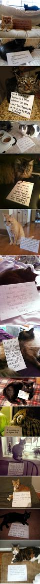 Cat shaming. Equally if not more entertaining than dog shaming, because cats are not even a little ashamed of their shenaigans.: I Love Cats, Cat Shaming I, Shaming Cats, Catshaming, Funny Cats And Dogs, Crazy Cat, Animal Shaming, Cat Lady