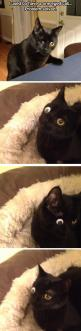 Oh my gosh I can't stop laughing, but it's so mean...: Cats, Googly Eyes, Cat Problem, So Funny, So Sad, Cat Lady, Animal