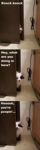 Funny Animal Pictures Of The Day – 21 Pics: Funny Animals, Cat, Funny Dogs, Dogs 3, Animals Funny, Animal Funnies, Funny Animal Pictures, Funny Humor, Funniest Pictures