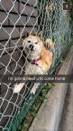 LOL Funny Animals of the hour (02:56:52 PM, Tuesday 07, April 2015 PDT) – 20 pics: Giggle, Funny Snapchat, 26 Snapchats, Dog Snapchat, Dogs Funny, Animal Funny